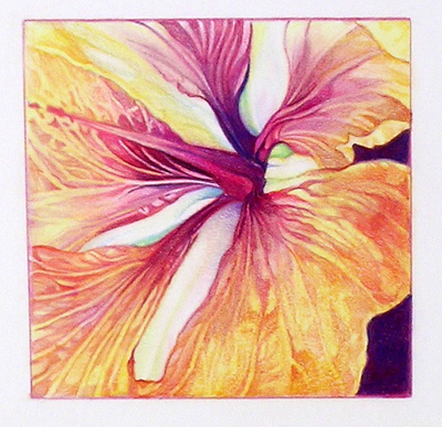 SANDRA BENNY Hibiscus Detail Drawing Colored Pencil Original