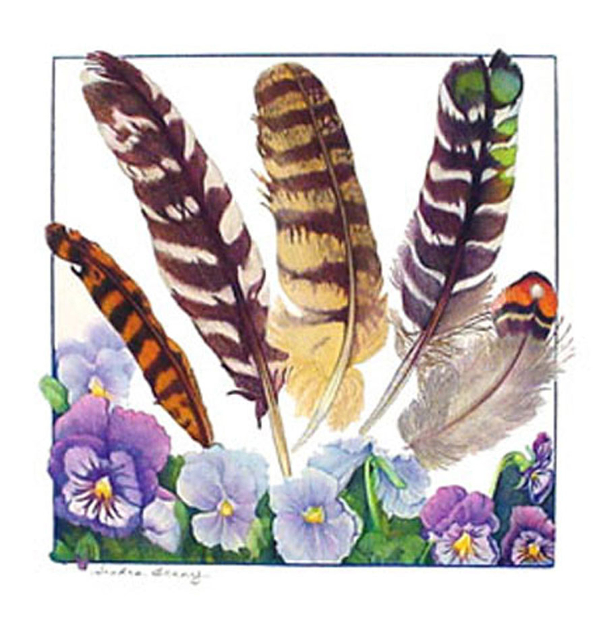 Colored Pencil Feather Feathers Colored Pencil on